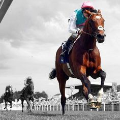 Frankel the best race horse in the world.