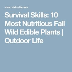 Survival Skills: 10 Most Nutritious Fall Wild Edible Plants | Outdoor Life