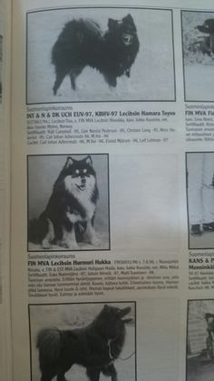 Found in the magazine of the Lapphund Club of Finland, another ancestor of the Bearspaw Kennel Finnish Lapphunds. Photo by Leeza Friedman-Prokopishyn. Finland, Magazine, Club, Dogs, Animals, Animales, Animaux, Pet Dogs, Magazines