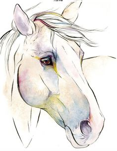 Horse drawing idea