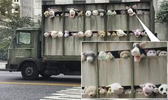 Banksy's latest piece is a roaming truck filled with stuffed animals