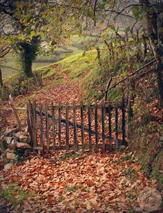 A perfect gate for a cottage in the countryside! Autumn Day, Autumn Leaves, Autumn Walks, Fallen Leaves, Beautiful World, Beautiful Places, Seasons Of The Year, All Nature, Garden Gates