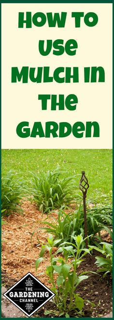 How to use mulch in your garden and why it's good for your plants. It controls weeds and helps to retain moisture in your soil.