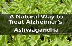 The Benefits of Ashwagandha, A Natural Way to Fight Alzheimer's