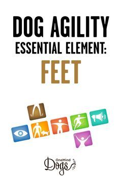 Seven essential elements of agility handling: feet. Due to the size difference between the handler and the dog, the feet of the handler play more significant role in handling than the arms. The direction of the handler's toes, as well as the direction that he is taking his steps to, gives a lot of information to the dog. To understand what your dog actually sees, it is quite helpful to go down on the ground and observe the handling from the dog´s perspective.
