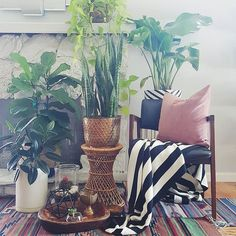 Hey friends,  My super talented friend Chelsea @chelsea_stylemutthome tagged me earlier to share what i was up to?#widn this lady is super awsome as im sure everyone is already following. Check her  beautiful home on @designsponge. Also, its monday and this is the only green that invades my home #colormyworldmonday
