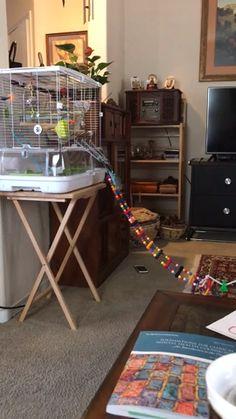 Diy Budgie Toys, Diy Bird Toys, Parrot Toys, Diy Parakeet Cage, Parakeet Toys, Funny Birds, Cute Birds, Cockatiel Cage, Budgie Cages