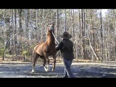 Rearing Behavior - what causes it and how to get your horse to calmly stand in willingness.