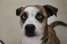 Adopt A Dog Dc Craigslist