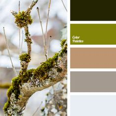 Delicate beige and pastel blue palette turns into dark green through the bonding color of young sticky leaves. This range is suitable for creating a cozy home interior in spring colors. The combination of light beige and lush green shades can be used for overclothes.