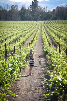 travel style new york home food drink family design california Happy six years, Hither & Thither! Wine Country, Country Life, Sonoma Valley, Napa Valley, Farm Layout, Mothers Day Weekend, Wine Tourism, California Dreamin', Northern California
