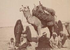 We need one http://www.greenprophet.com/2010/06/one-hump-camel-race/