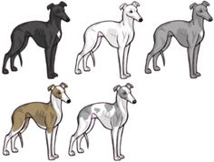 Whippet favorite Dog Colouring pages Pinterest Whippets Dog