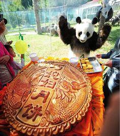 Panda, Qing Feng, mooncake, Mid-Autumn Festival