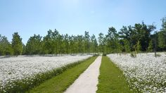 The Natural Park Of Pelissier by Atelier ARCADIE - Nave - Cassa espansione -  Natural meadow - natural park - natural path