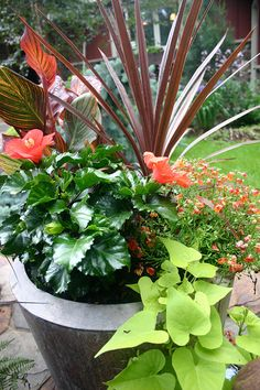 Dressing Your Pots For Success