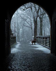 #Winter #dog #snow #schnee #hund #photooftheday #bamberglieben #bamberg #altenburg #bayern #bavaria #photograph #photography #photo #natur #nature #nikon #nikonphoto # by xmoflitzx