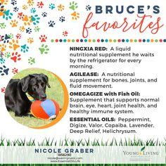 Using Essential Oils For Your Dogs - EssentialOils.Life