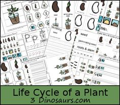 FREE Life Cycle of a