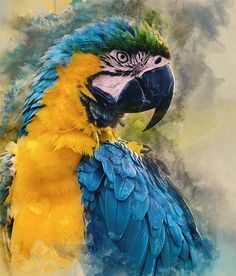 Fabric: 22 count Aida Stitches: 268 x 365 Size: 13 inches x 17 inches Number of Colors: 134 Android Wallpaper Blue, Bird Wallpaper, Iphone Wallpapers, Wallpaper Lockscreen, Tropical Birds, Colorful Birds, Exotic Birds, Pretty Birds, Beautiful Birds