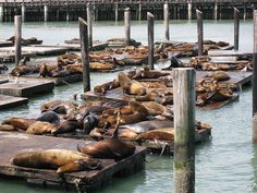 visit the sunbathing sea lions at Pier 39