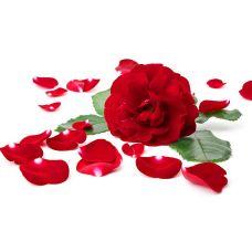 Zdjęcie Wild rose with petals around isolated on white background obraz seryjny, obrazy i fotografie seryjne Image Fm Cosmetics, Pretty Flowers, Indoor Outdoor, Plants, Arte Floral, Bb, Amor, Hearts, Centre