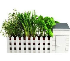 Verschenke einen Vorstadtgarten mit dem Kräutergewächs Geschenk-Set. In diesem Kräuterset findest du alles für die Mediterrane Küche. Das originelle Geschenk-Set passt wunderbar auf deine Fensterbank oder deine Arbeitsfläche.
