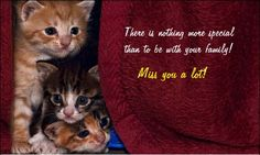 Missing your #family as you can't be home this #weekend? #Whatsapp them a miss you text with this cute #kitty #ecard.
