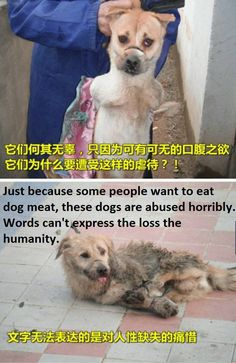 Stop eating dogs China
