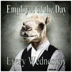 Have a great hump day! The weekends around the corner! Grab your coffee and a blanket and start the countdown! Wednesday Greetings, Wednesday Hump Day, Happy Wednesday Quotes, Wednesday Humor, Wednesday Coffee, Diva Quotes, Jokes Quotes, Cartoon Quotes, Daily Funny