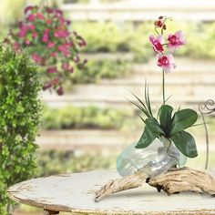 Wurzelholz Sculptur / Root Sculpture / Vase / Orchidee / Orchid