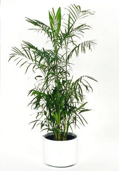 Go 'Green Clean' - Purify the Air in Your Studio or Office with House Plants!