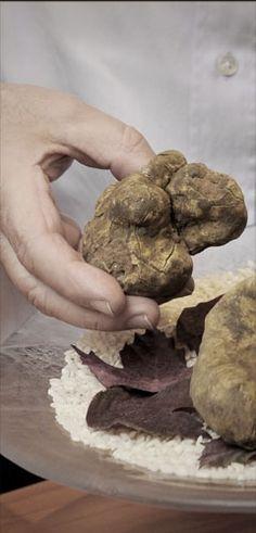 Pour une prochaine excursion à Alba dans le Piémont, un bon petit resto tenu par une équipe jeune. On y mange divinement et pas que de la truffe blanche...