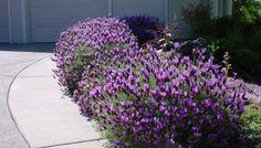 plantas y flores autoctonas de cordoba argentina - Buscar con Google