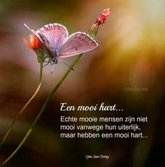 Een mooi hart One Liner, Good Morning Quotes, Friends Forever, Picture Quotes, Lyrics, Wisdom, Sayings, Words, Missing Link