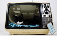 cama-de-tv-retrô-para-gato1