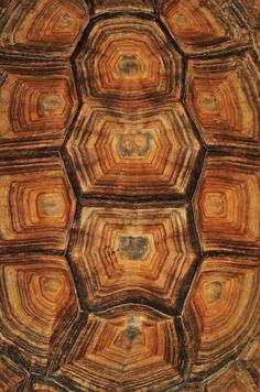 Tortoise Shell  #patterns and #textures