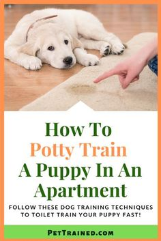 Here's how to potty train a puppy in an apartment fast. For an enjoyable dog owner experience you need this.It can be done in any apartment. Apartment Puppy, Potty Training Puppy Apartment, Puppy Potty Training Tips, Dog Training Treats, Training Your Puppy, Litter Training Dogs, Dog Potty, Dog Training Techniques, Toilet Training