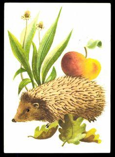 Künstler Ak -- hedgehog with apple, flowers