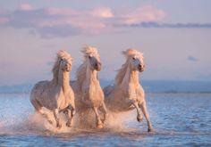 ❥ Horses in the ocean