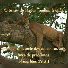#Provérbios #Sabedoria #Temor #Paz #Descanso #DeusFiel #rosiigiil