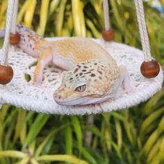 Lepord Gecko, Leopard Gecko Cute, Leopard Gecko Habitat, Leopard Gecko Morphs, Cute Gecko, Leopard Gecko Setup, Terrariums Gecko, Leopard Gecko Terrarium, Lizard Terrarium