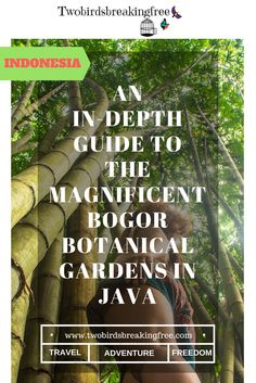 An In-Depth Guide To Visiting The Bogor Botanical Gardens In Java - Twobirdsbreakingfree Vegetable Garden Planning, Bogor, Archipelago, Plan Your Trip, Botanical Gardens, Travel Guides, Adventure Travel, Front Yards, Places To Visit