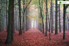 Mist in the Woods photography print by SycamorePhotography Wood Slices, Mists, Woods, Vineyard, Places To Visit, Photographs, England, Country Roads, A4