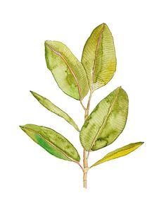Fluid watercolor leaf.