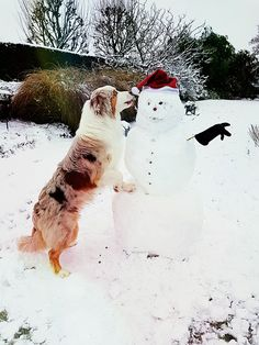 Cash, my australian shepherd with his new best friend mr snowman ❤☃️❄