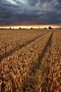 Stormy Sunset   Wheat field