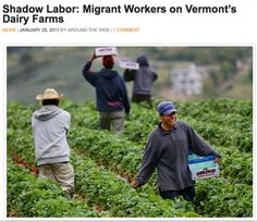 MIGRANT WORKERS:  Defined as a person who moves from place to place to get work, especially a farm laborer who harvests crops seasonally.