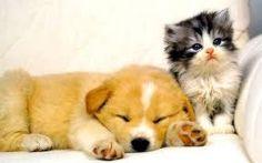 tatlı kedi ve köpek yavruları ile ilgili görsel sonucu
