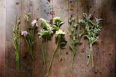 Flower-Arranging Secrets Straight From A Brooklyn Florist #refinery29  http://www.refinery29.com/diy-wedding-bouquets#slide2  The Wildflower Bouquet (L to R) Grass Wild sweet pea Nigella pods Queen Anne's lace Mini peonies Mint